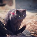 初めて会う黒猫さん