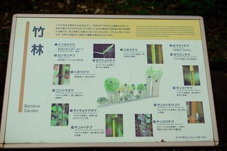 皇居東御苑 竹林図