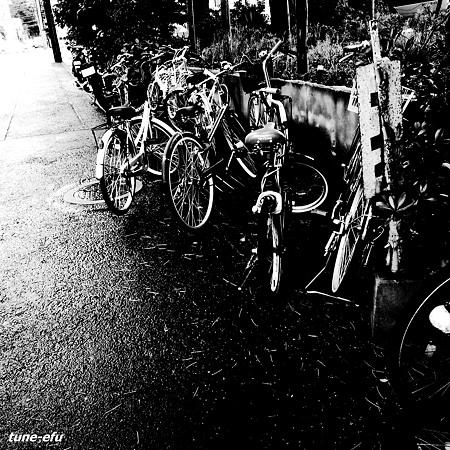 自転車置場に雨の朝