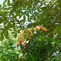 Photos: 栃の木の秋