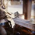 写真: Instagram 小江戸佐原2