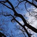 写真: 青空とともに…
