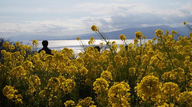 菜の花越しの海