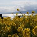 写真: 菜の花越しの海