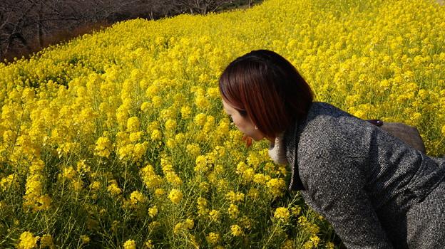 写真: 春を感じる優しい匂い