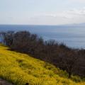 写真: 海を眺めて