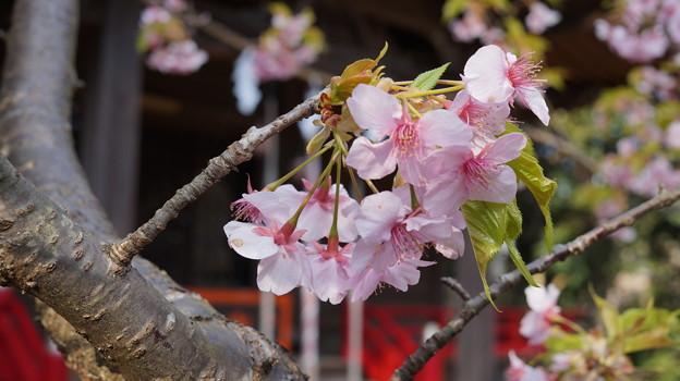 春を囲んで