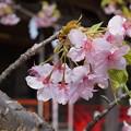 写真: 春を囲んで