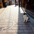 Photos: 中野の住人