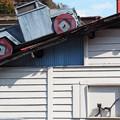 Photos: 猫とトラック
