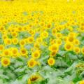 黄色の思い出