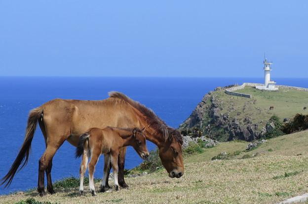 写真: 2240 与那国馬の親子@与那国島