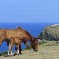 Photos: 2240 与那国馬の親子@与那国島