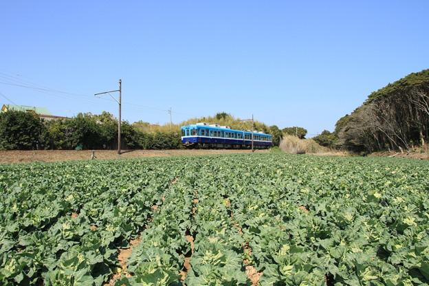 写真: 2246 キャベツ畑と銚子鉄道@千葉
