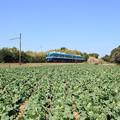 Photos: 2246 キャベツ畑と銚子鉄道@千葉