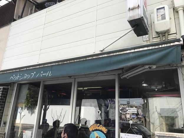 Photos: 20170304 ペットショップパール
