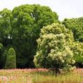 Photos: ♪大きな栗の木の下に・・・^^;