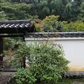 Photos: 月真院