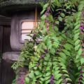 Photos: 紫式部