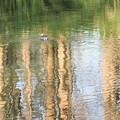 Photos: 小池