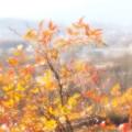 写真: 錦織公園