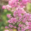写真: 花の文化園にて