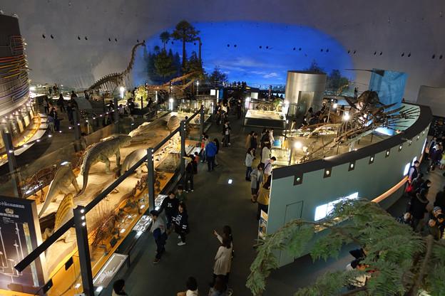 恐竜博物館3