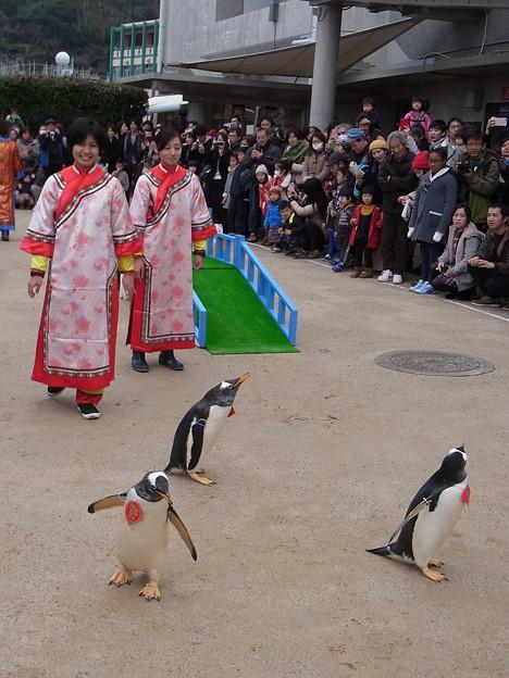 20170205 長崎ペンギン水族館 14
