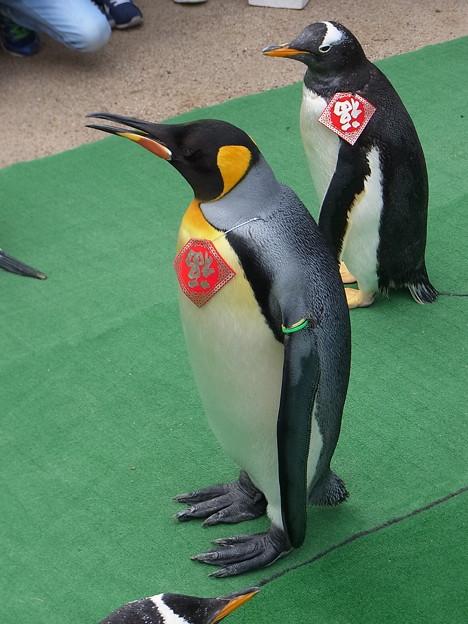 20170205 長崎ペンギン水族館 17