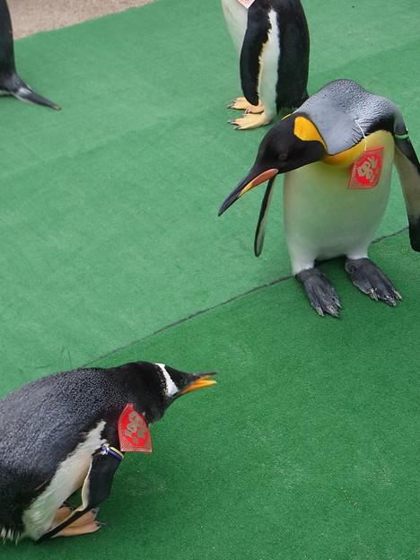 20170205 長崎ペンギン水族館 18