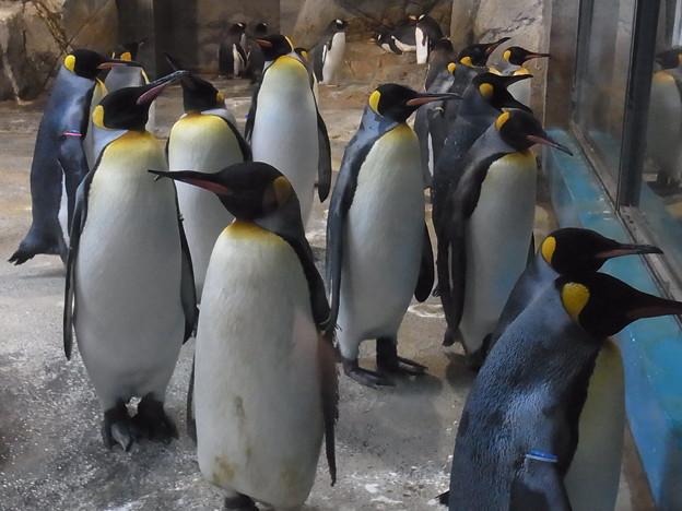 20170205 長崎ペンギン水族館 24