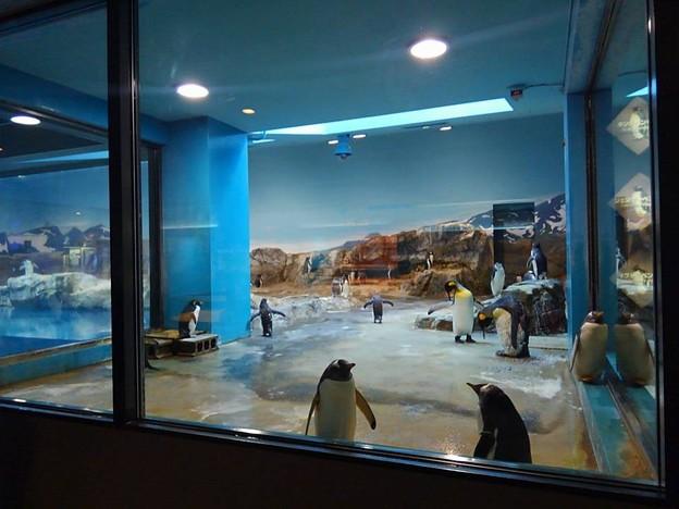 20170314 長崎ペンギン水族館 03