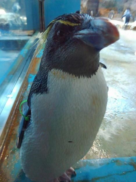 20170314 長崎ペンギン水族館 05