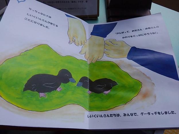 20170314 長崎ペンギン水族館 15