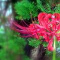 天上の花!(今朝の一枚)