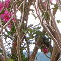 写真: 花弁散らすのは僕たちで~~す