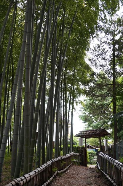 東久留米 竹林公園