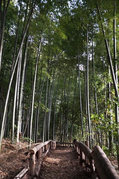 東久留米 竹林公園 2