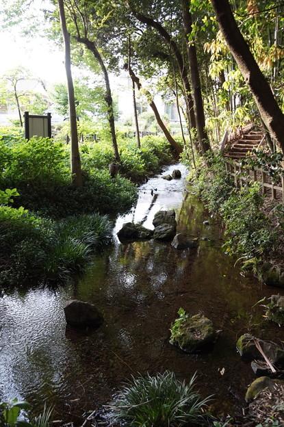 東久留米 竹林公園 4
