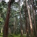 青苔と杉の木立ち