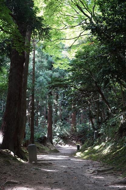 五合庵への道