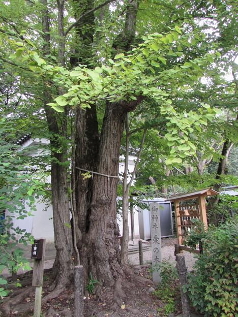 梨木神社2