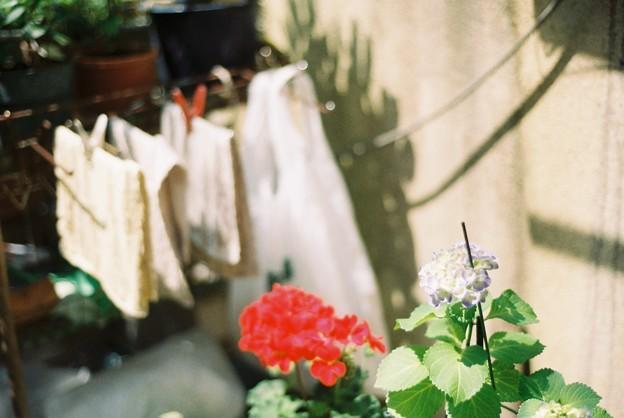 紫陽花の咲く所