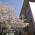 Photos: tokiwadai090411008