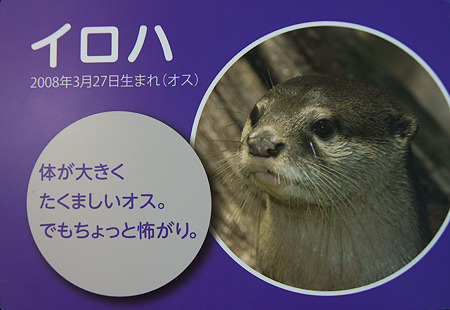 miyajima110806008
