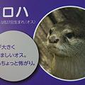 Photos: miyajima110806008