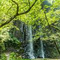 写真: 白糸の滝-1