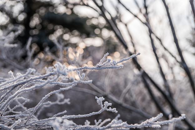 仁田峠の霧氷