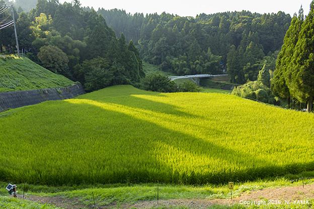 山間部の美しい田