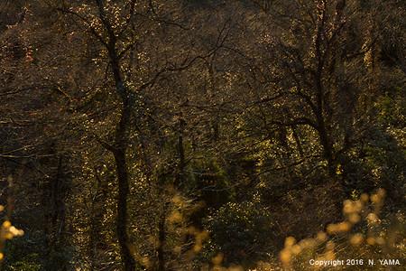 黄昏時の森